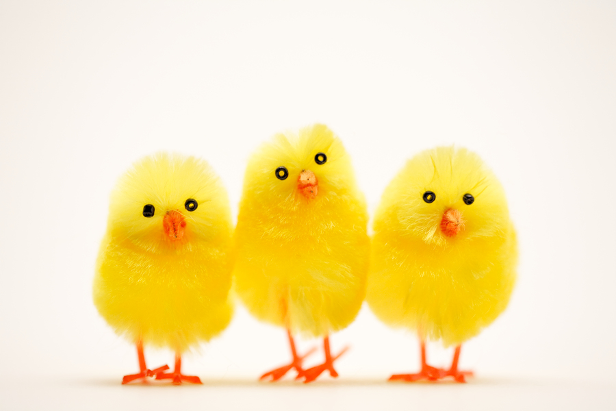 Baby Chicken Quotes: What Does Easter Mean For Retail... ?